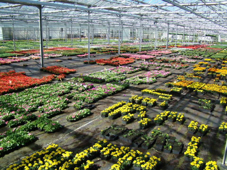 horticulture-groupement-employeurs-nantes