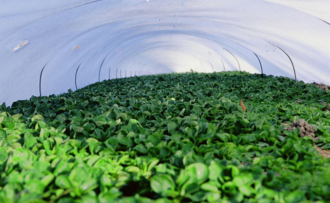 serre-salade-nantes-ge-agricole