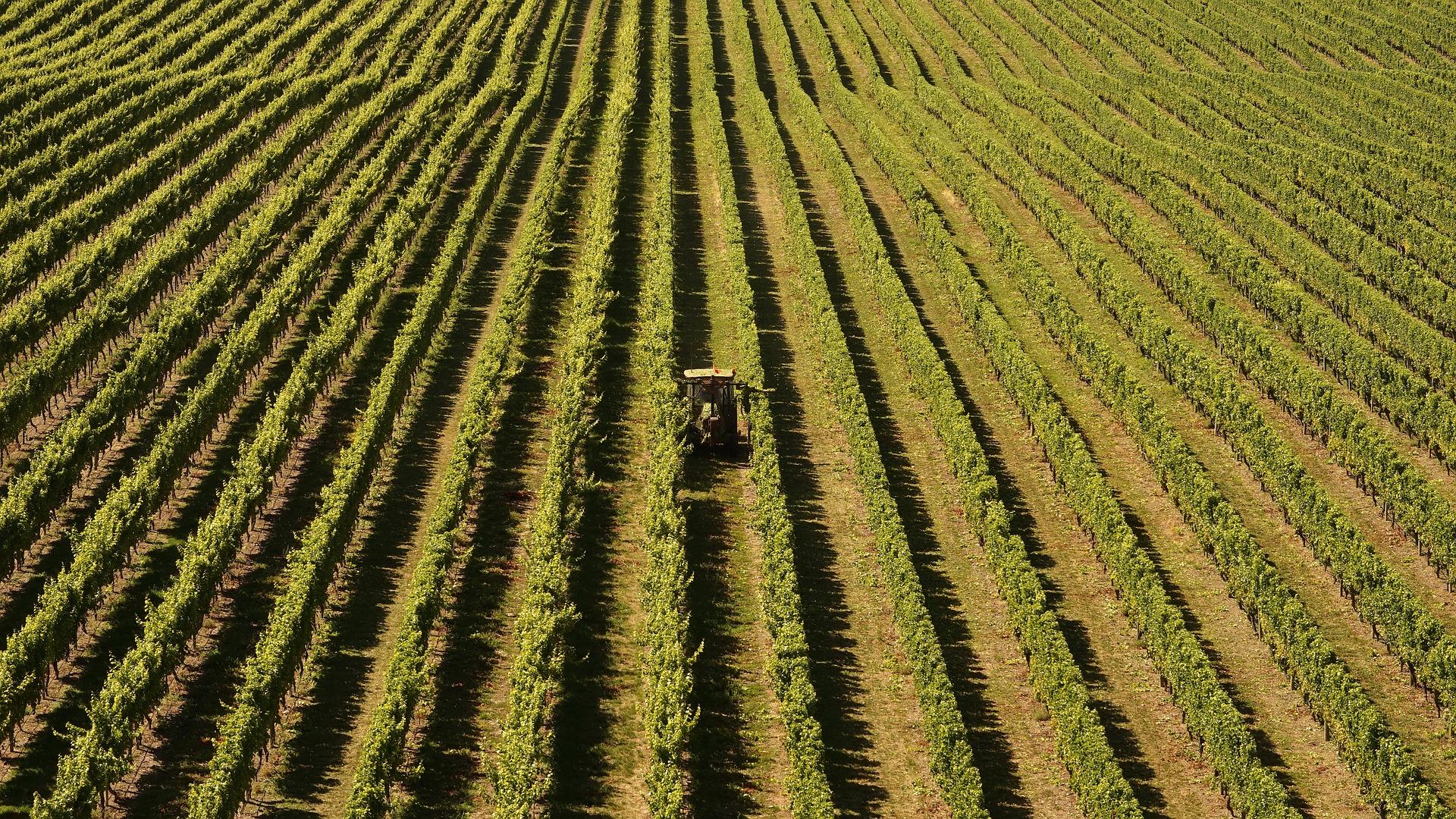 secteur-agricole-paysage-groupement-employeurs-loire-et-sevre