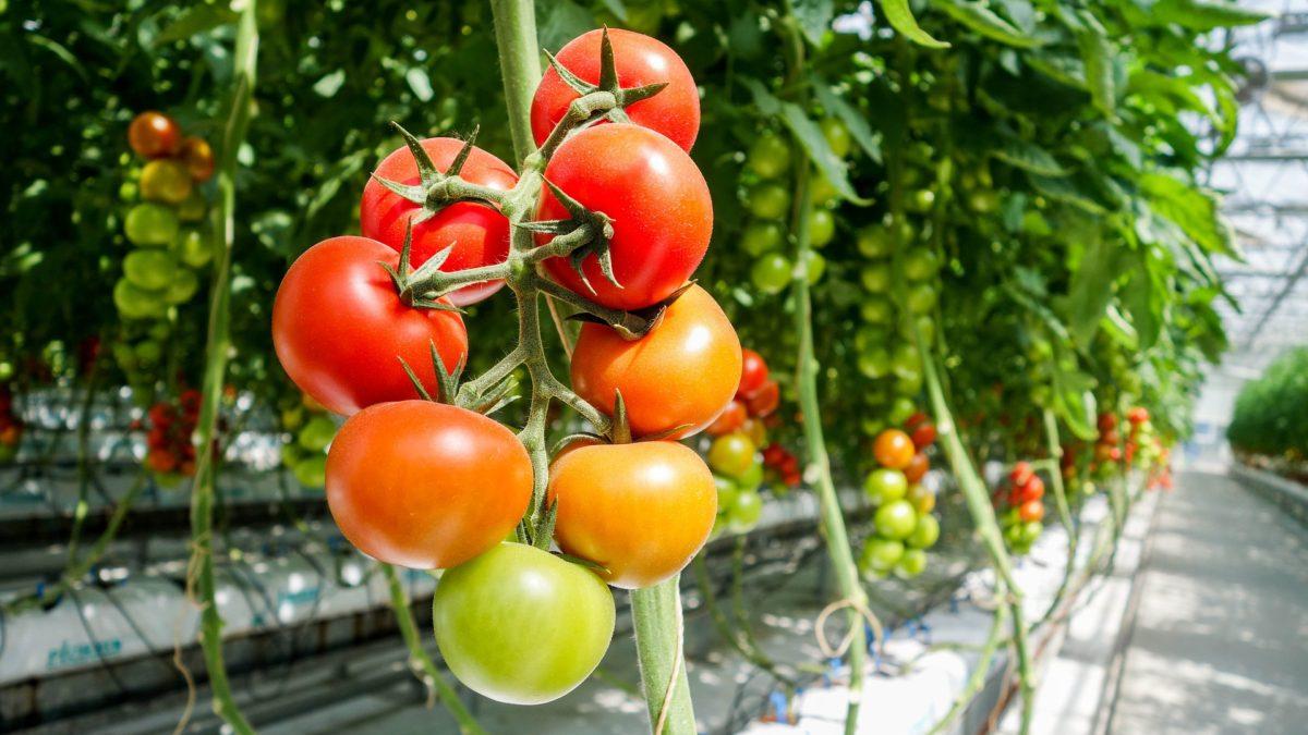ge-loire-et-sevre-secteur-agricole