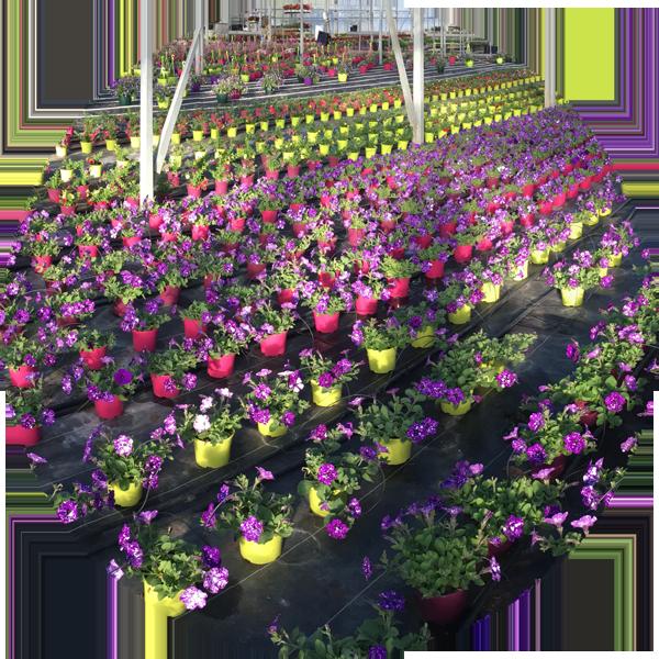 saisonnalité-horticulture-ge-loire-et-sevre-nantes
