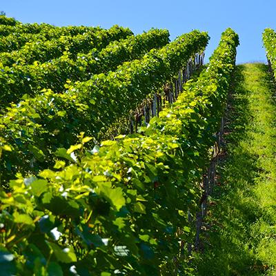offres-d'emplois-secteur-agricole-viticulture